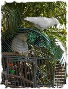 papagali poveste image002