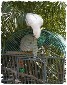 papagali poveste image003