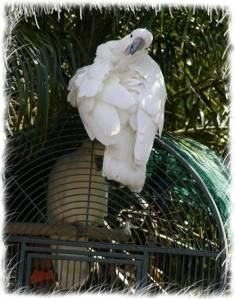 papagali poveste image004