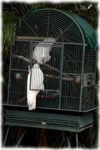 papagali poveste image006