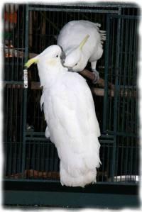 papagali poveste image007