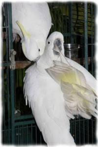 papagali poveste image009