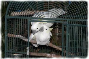 papagali poveste image010