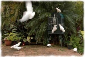 papagali poveste image011