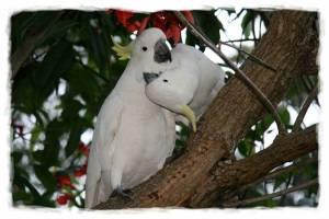 papagali poveste image012