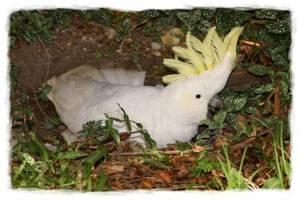 papagali poveste image013