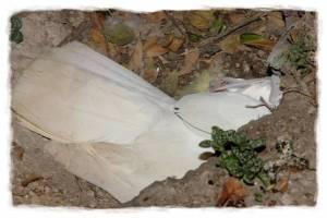 papagali poveste image014