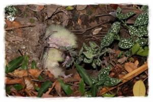 papagali poveste image015