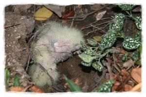 papagali poveste image016